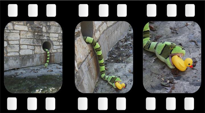 snake_filmstrip